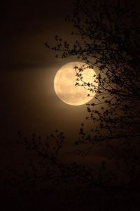 """Went out to get pics of """"Super Moon"""", but the thin layer of clouds just wouldn't go away. So they was the best comprimise I could get."""