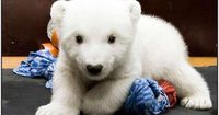 I just want this polar bear to love me..
