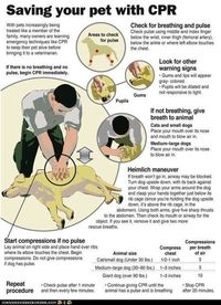 """Good to know, might save a dog's life one day! HUGE Disclaimer--Giving rescue breathes to a Dog (of any size)--be very careful. Similar to giving C.P.R. to a Baby. *DO NOT* blow """"too hard"""" or you risk possible damage to a dogs lungs...."""