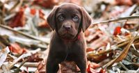 i need to buy a house so i can own this puppy