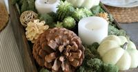 Want a gorgeous earthy tone for your Thanksgiving centerpiece this year? Check out these fabulous tips on incorporating plants to your table this year.