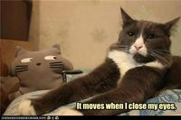 Hehehe...funny cats always put me in a good mood. :)