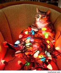 Funny Christmas eve picture with a cat