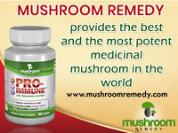 """Mushroom Remedy   Best of Nature �€"""" Natural cure with mushrooms extracts  Mushroom Remedy, a leader in mushroom supplements, brings you the most potent medicinal mushrooms with proven extraction techniques. Our products are all nature and ma..."""
