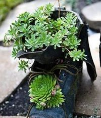 10 tips for container gardens...