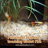 Free Preschool Science: Learning About Fish Printables | Free Homeschool Deals ©
