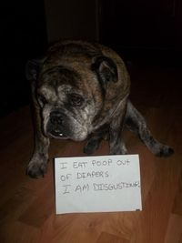 Potty Mouth Bully I eat poop out of diapers. I am disgusting!View Post