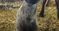 Having a bad day? Here is a smiling lamb... - The Meta Picture