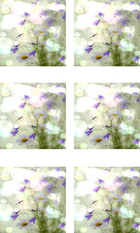 Fabric Panel Purple Flowers in Multiple Sizes Available. Flowers Poly Quilt Fabric Crafts Quilts, Quilters, Patchwork, Sewing Quilting $7.95