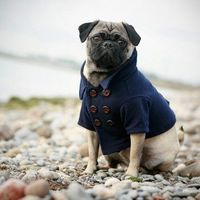 Your dog needs a peacoat. End of story. - $62