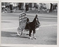 Turlock Mercantile advertises at the Stanislaus County Fair.  Snagged from Wikimedia Commons: https://commons.wikimedia.org/wiki/File:Kiddie Capers Parade Chicken.jpg