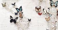 butterflies to mark where you've been