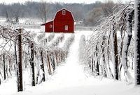 a barn house on a vineyard ... heaven! even is i have to live with the snow again.