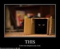 Funny cats :-)