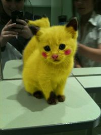 Awww...poor kitty. Feb 10, 2011: Sad kitten turned into real-life Pikachu (via reddit)