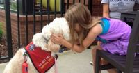 Seven-year-old Meghan Weingarth could go into anaphylactic shock if she eats anything containing peanuts or almonds. But a Goldendoodle called LilyBelle ...