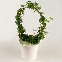 Ivy with white porcelain pot