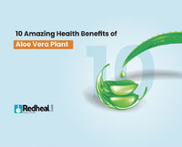 Did you know that the aloe vera plant is one of the most used medicinal plants for thousands of years. Check our blog article to know its top 10 health benefits.