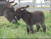 donkeys and baby donkey.