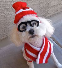 The Funniest Pet Halloween Costumes: Submit Your Own! (PHOTOS)