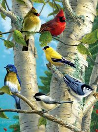 Artist's rendition of some of our favorite backyard birds