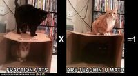 Is this why I was never good at math? My cats didn't help me?