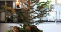 (via Kerst �˜… Christmas / Vintage cookie tin with live tree.)