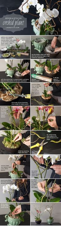 Use this easy step-by-step tutorial to style an affordable grocery store orchid plant into a floral shop design by handcrafted lifestyle expert Lia Griffith