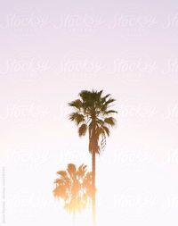 palm by jessemorrow | Stocksy United