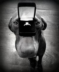 The Proposal~�™›.. I would DIE if my boyfriend did this since our puppy is our baby!