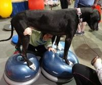 Have you signed up for Pawsitive Performance's K9 Conditioning class? Join students from all over the world! #dog #exercise - http://classroom.daisypeel.com/courses/k9-conditioning-i/