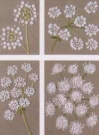 Queen Anne's Lace is a common wildflower or weed that grows in the USA. Named for Queen Anne, an avid lacemaker.