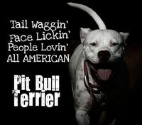 Tail Waggin' Face Lickin' People Lovin' All American - Pit Bull Terrier! :0))