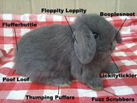 Bunny Anatomy. Laughed way more than I probably should have..