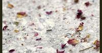 Learn how to easily make your own handmade paper from scrap paper and press flowers.