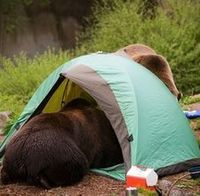 Camping is one of the most relaxing recreational activities you can enjoy, but there is nothing remotely soothing about having a bear tear into your food. And t