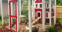 156570524520397028 How To Build An Amazing Chicken Coop #diy #homesteading #chickens
