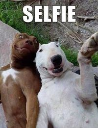 13 PRICELESS Selfies Taken By ANIMALS!