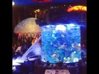 Fish Tank Bursts Open at T-Rex Cafe in Disney World's Downtown #Disney. Whoops!