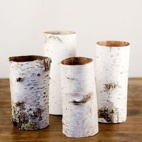 Natural Birch Bark Tubes