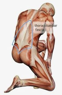 All that white stuff is called fascia and it affects everything.