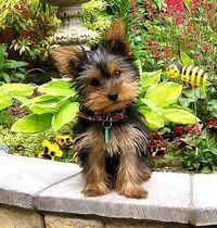 We've come up with a list of our Top 10 best dog breeds for apartments.