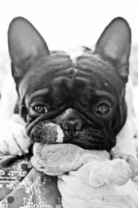 Thispostwas discovered by Ashlie Jeter. Discover (and save!) your own Pins on Pinterest. | See more about french bulldogs and bulldogs.