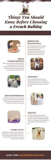 Things You Should Know Before Choosing a French Bulldog