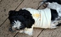 shirt for your dog - sometimes you have to dress up your little dog (for example when the doctor tells you, it's cold outside,...). But Dog-clothes are really expensive. This is just a small DIY making T-Shirts out of onesies.