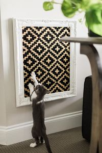 HGTV shares easy DIY projects and crafts for cats and cat lovers, from recycled t-shirt toys to hanging basket loungers.