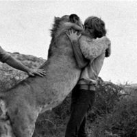 Christian the Lion is a phenomenally popular video clip from the 1971 Australian documentary Christian, The Lion at World's End featuring a domesticated lion re