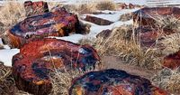 Petrified Wood National Park, Arizona - crystals of minerals replace wood, until it is a stone copy of the tree that once was...
