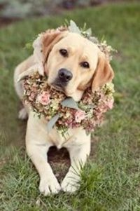 What a cute ring bearer :) If I can train my dog to be the ring bearer, I will do this when I get married:) #timelesstreasure.