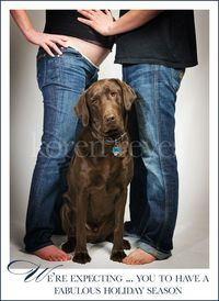 Christmas card using maternity pictures with dogs and holiday cards with pregnancy photos and pets
